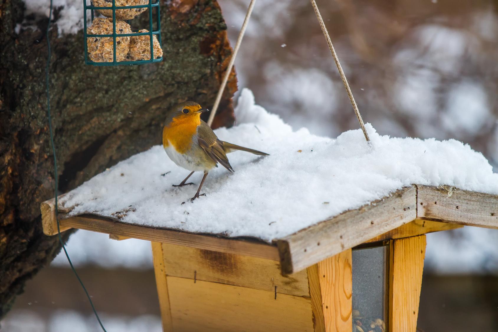 le g te et le couvert pour nos oiseaux en hiver blog bio bien tre et sant par. Black Bedroom Furniture Sets. Home Design Ideas