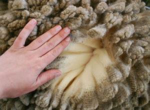 Laine de merinos : vêtemements bio et éthiques