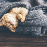 Avoir chaud en hiver