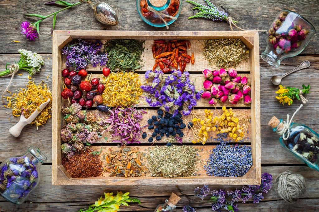 Fleurs de bach et elixirs floraux pour la santé