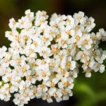 3 super plantes aromatiques contre les maux d'estomac