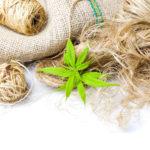 Le chanvre, la plante « écologique » qui a tout bon !