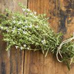 plantes sauvages à consommer