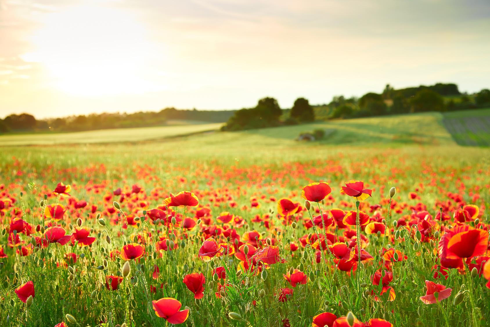 A quand la fin des pesticides ? Vive le bio !