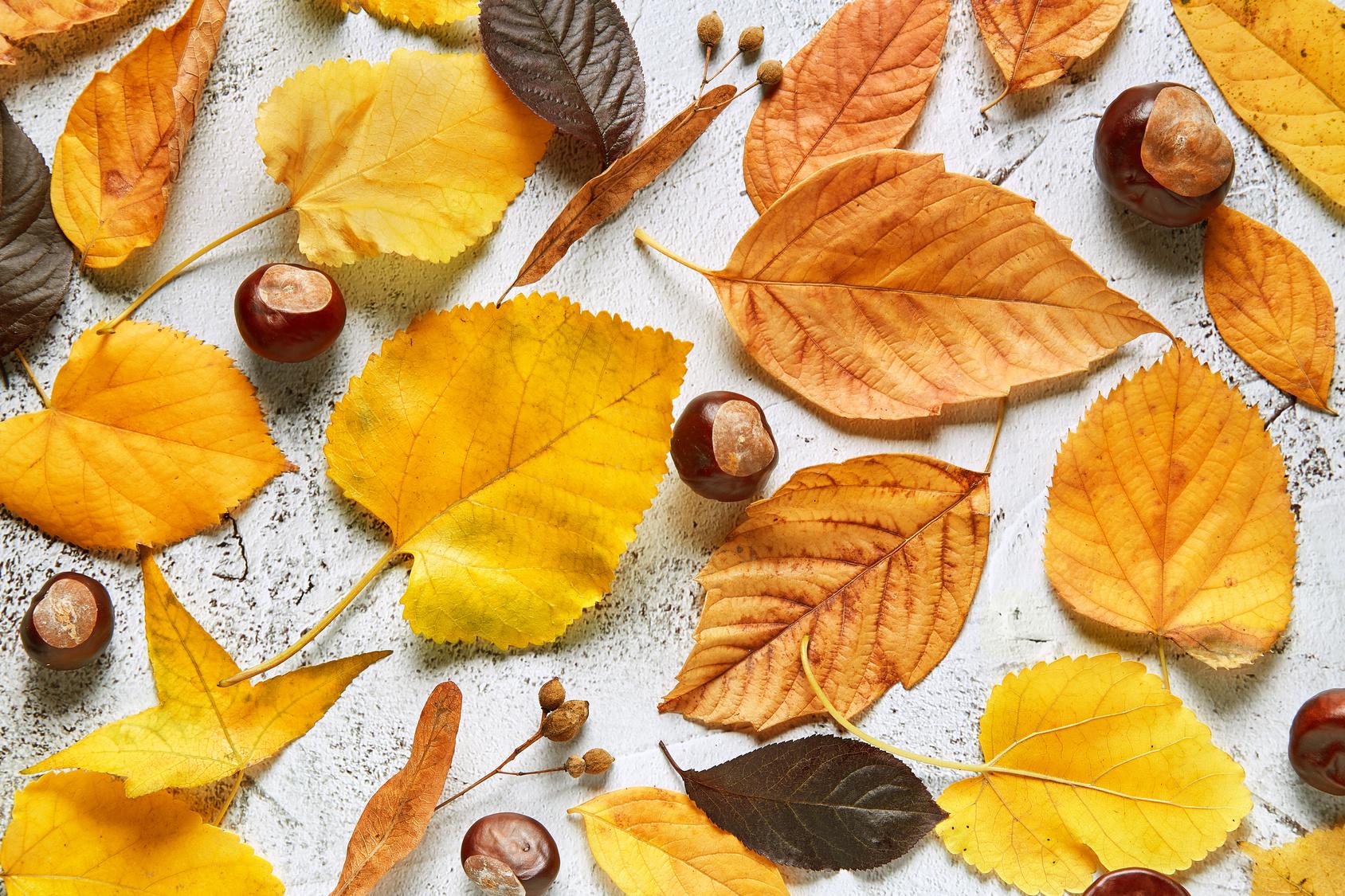 Les essentiels du mois d'octobre