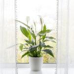 Plantes et air intérieur: démêler le faux du vrai