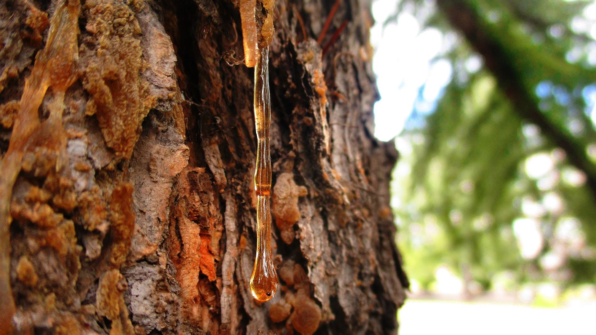 L'ambre : une résine fossile qui fascine
